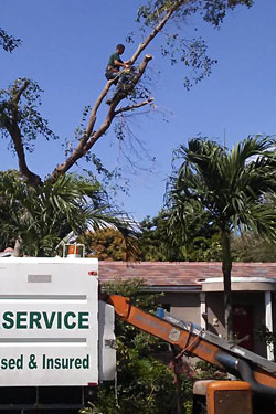 Tree Removal Services T
