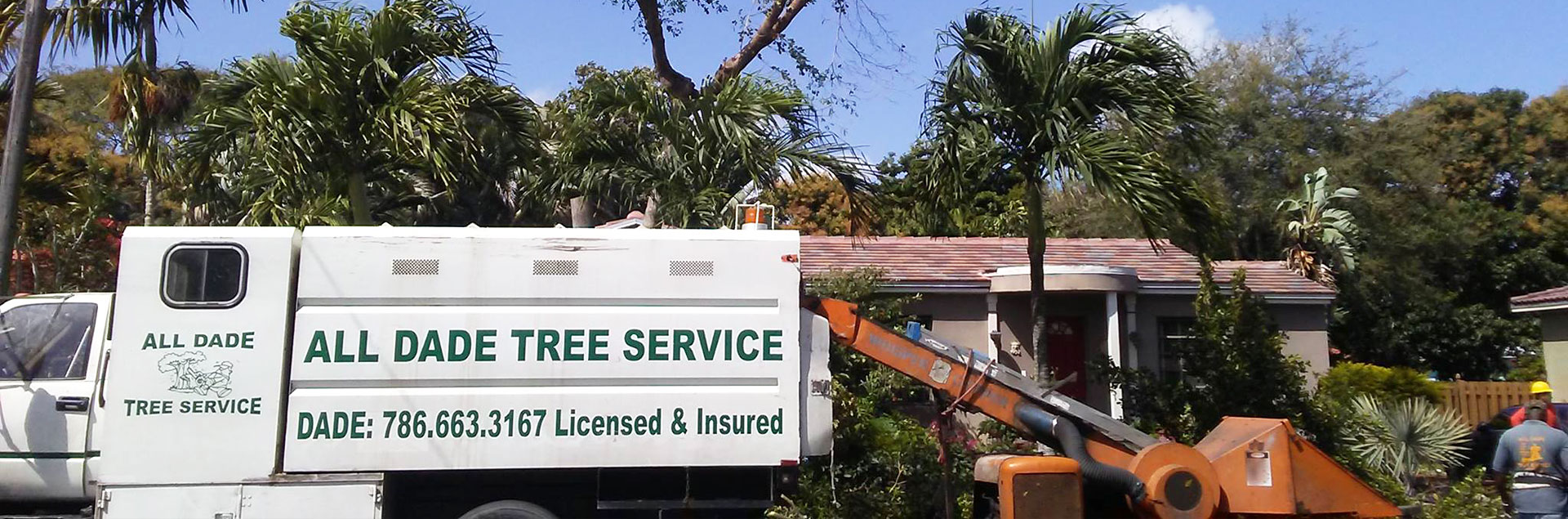 Tree Removal Services, Tree Services